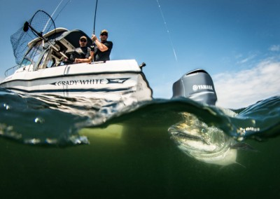 chinook salmon fishing underwater photo