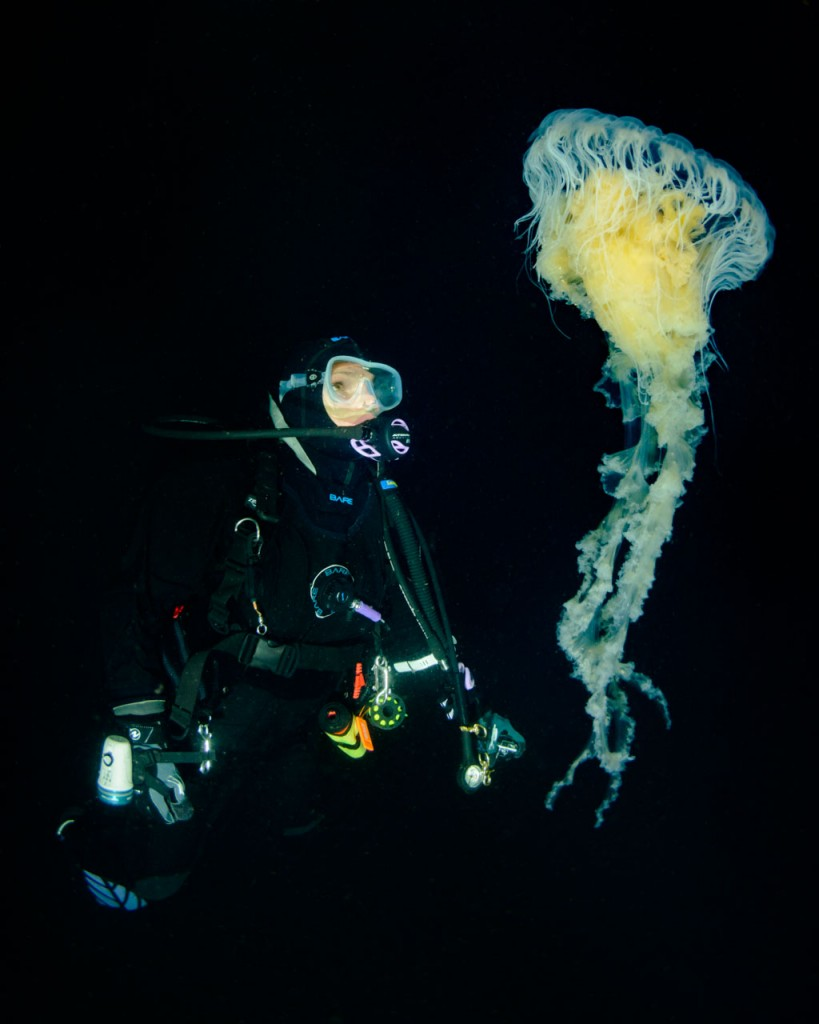 egg-yolk-jellyfish-and-diver