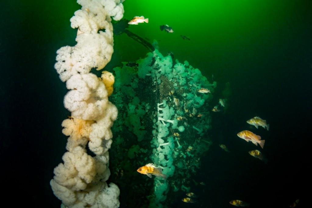 capilano shipwreck and rockfish