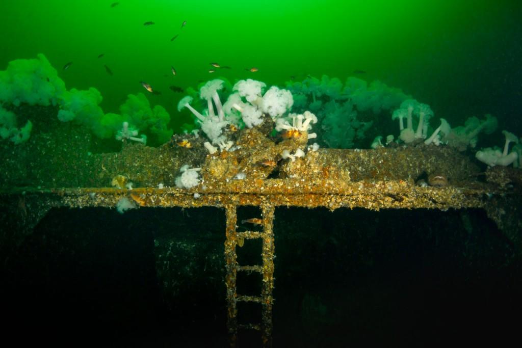 capilano wreck structure