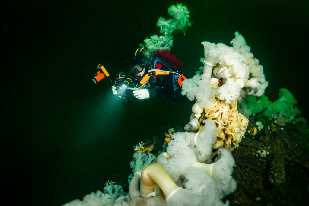 diver on capilano shipwreck