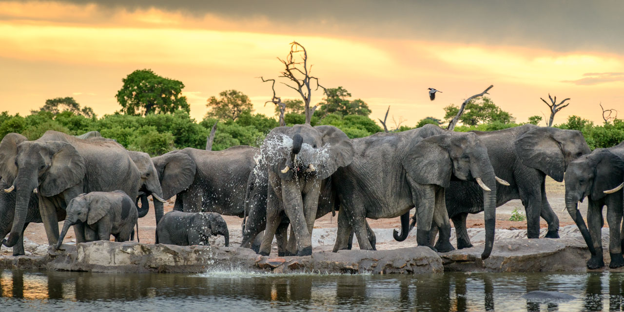 Herd of elephants gather at sunset at pump pan watering hole.