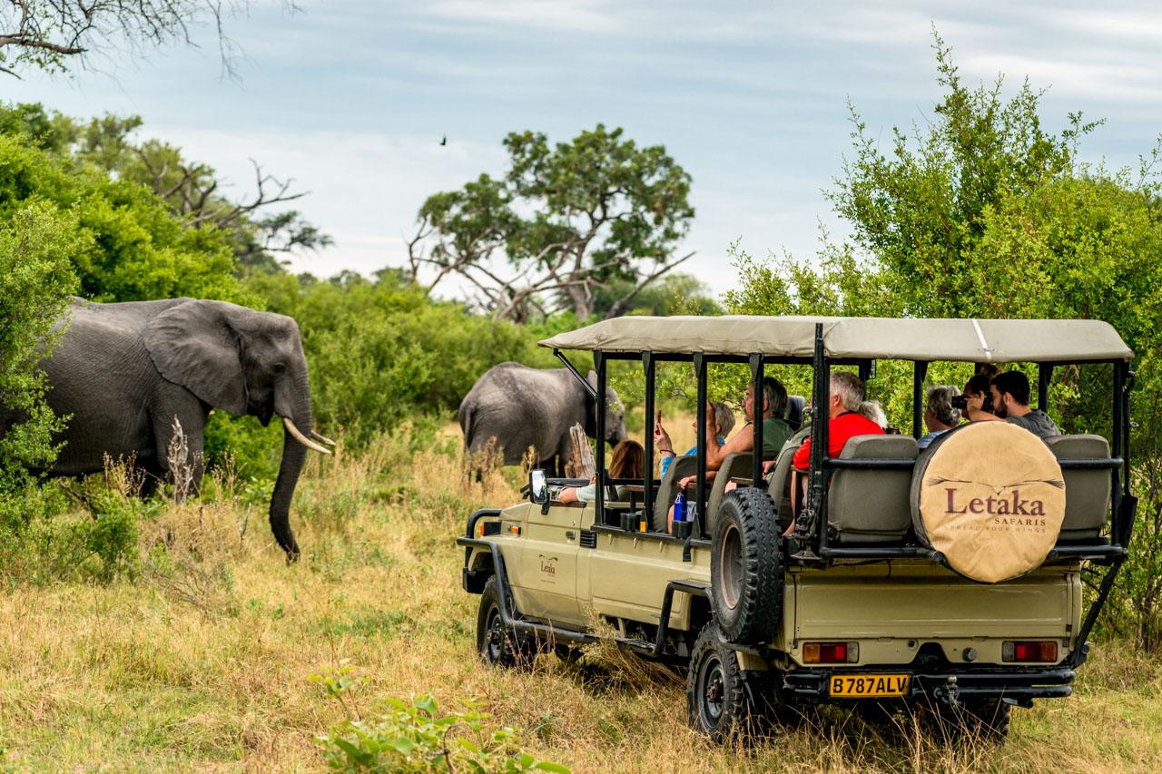 elephant and letaka safaris