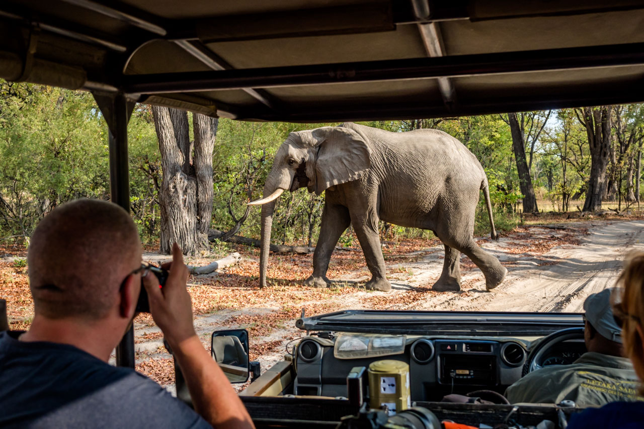 Elephant passes in front of vehicle