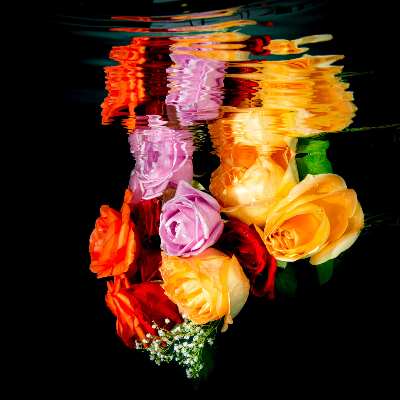 Bouquet of roses underwater image