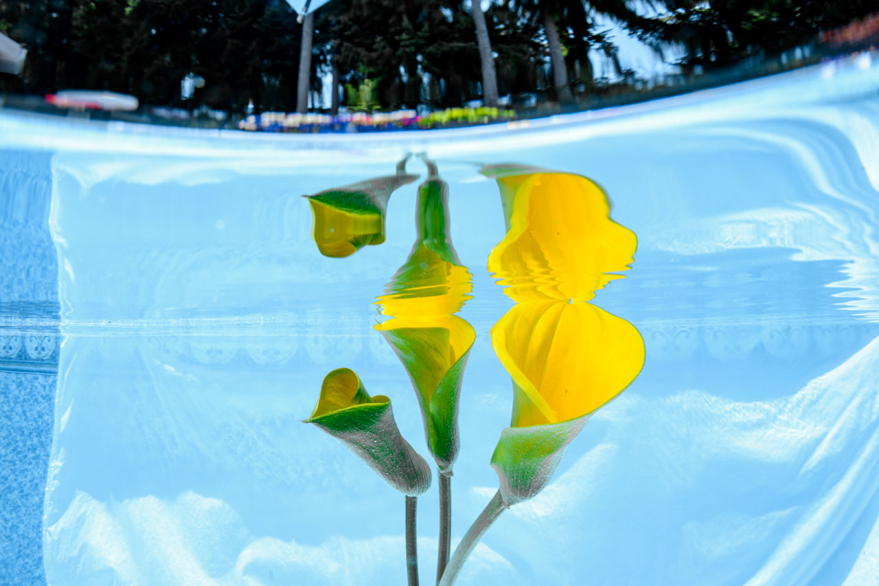 Shooting flowers in pool for my project