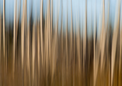 abstract blurry tree image