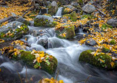 fall colours and mossy rocks along stream