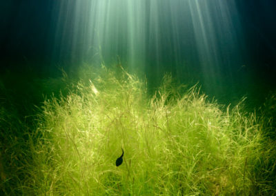 Shafts of sunlight enter water with a solitary tadpole