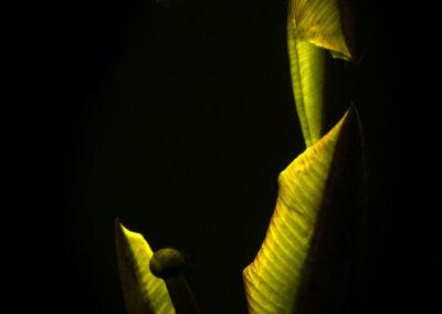 dark moody view under surface of swamp