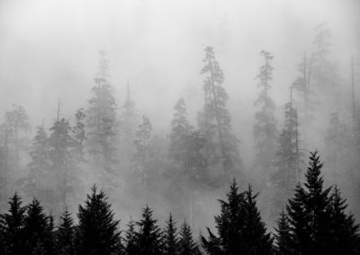 West Coast forest in fog