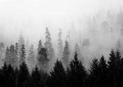 Monochrome image of West Coast forest in fog