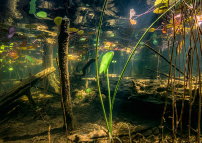 Mysterious view under a swamp