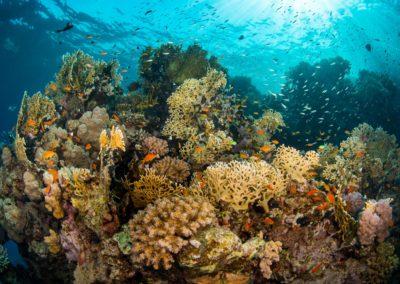 Abundant coral in teh Red Sea, Egypt