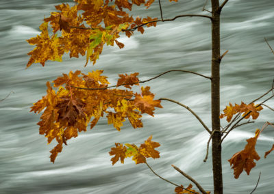 Rushing waters of the Campbell River during fall