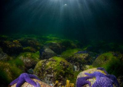 Purple Seastars and sunlight