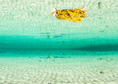 yellow leaf floating in clear turquoise water