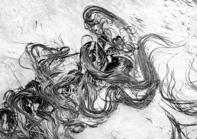 kelp awash in surface of sea