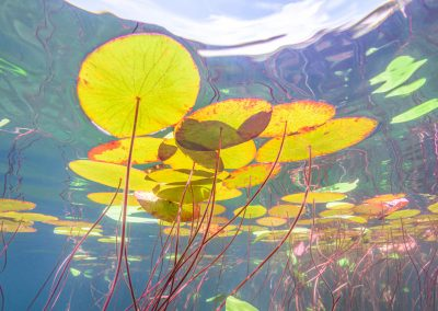 My idea of the view beneath Monet's water lily ponds.