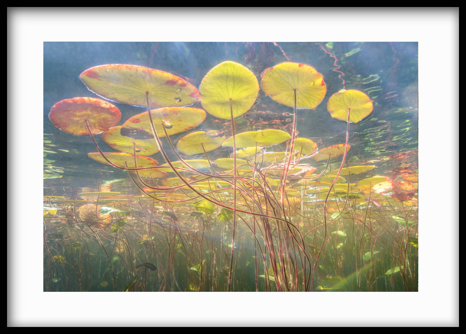 impressionistic underwater image like Monet's water lilies
