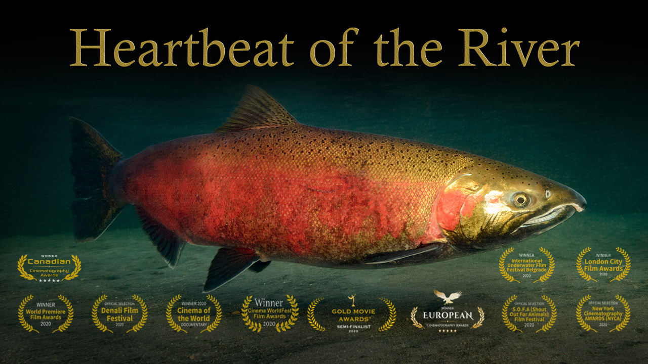 Heartbeat of the river image title card