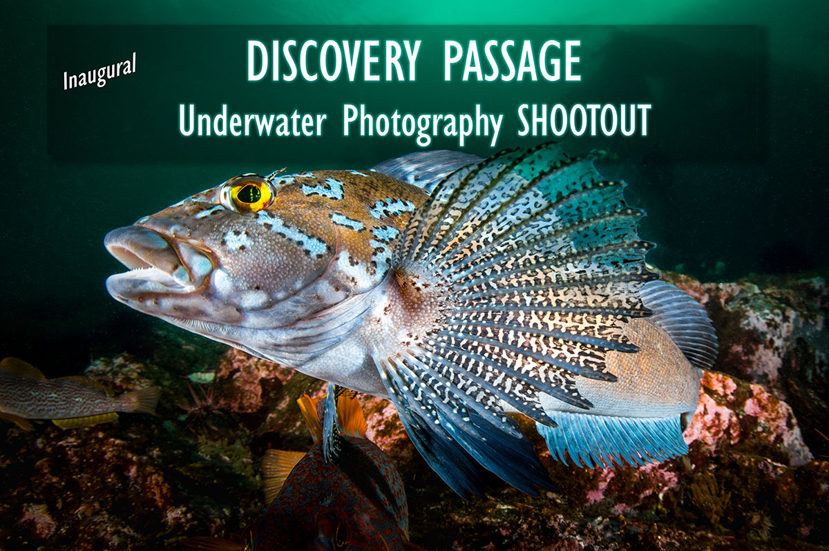 Discovery Passage Underwater Photography Shootout