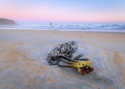 Kelp on a sandy beach at sunset