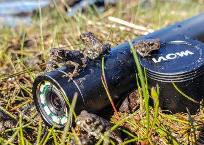 Laowa 24mm wide angle macro probe lens
